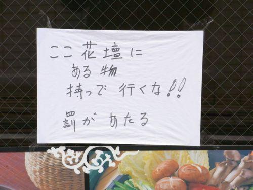 2011 11.13 16.JPG